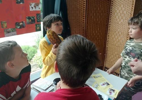 Kind zeigt große Kakaobohne